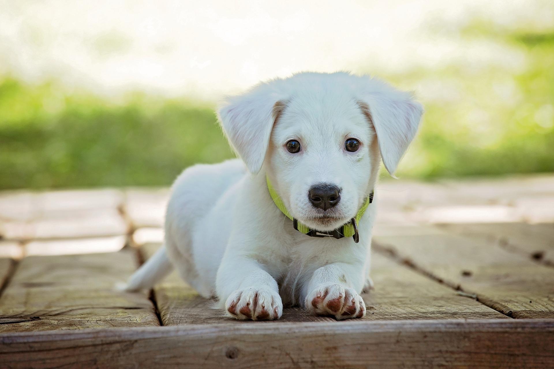 Dog Friendly Hotels, Dog Friendly Accommodation